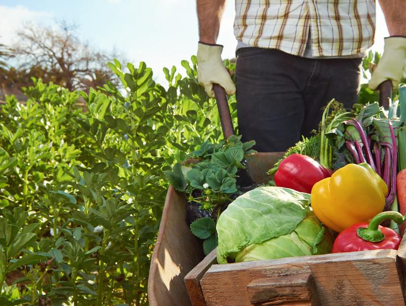 sicurezza aziende agricole ditek